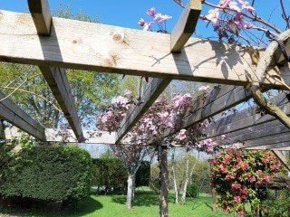 Pink Spring flowers winding around the arbour supports